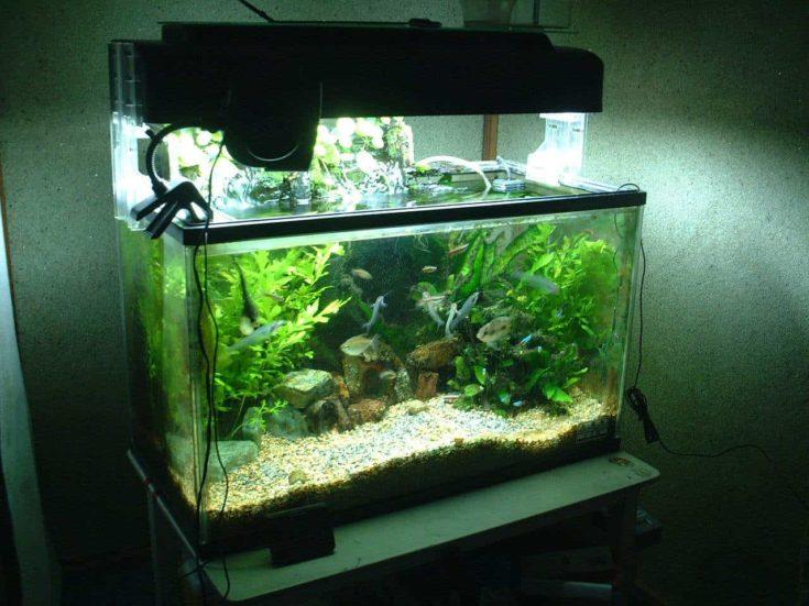 Aquarium in a green dim light