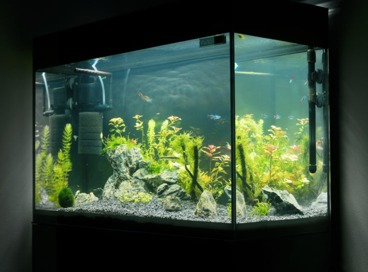 Beautiful planted tropical freshwater aquarium with fishes. Aquascape.