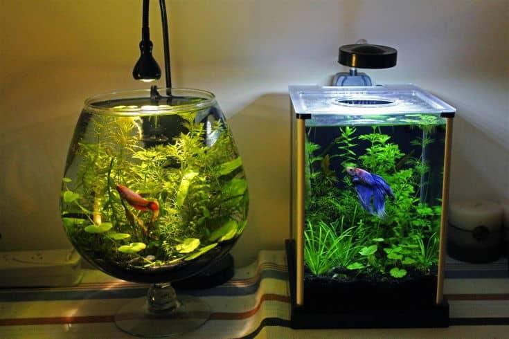 2 Betta Fish Bowl