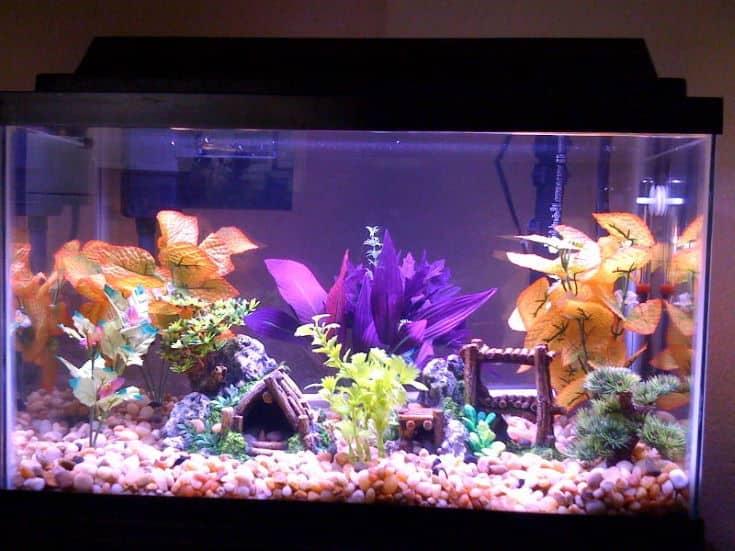 Beautiful Colors fish tank