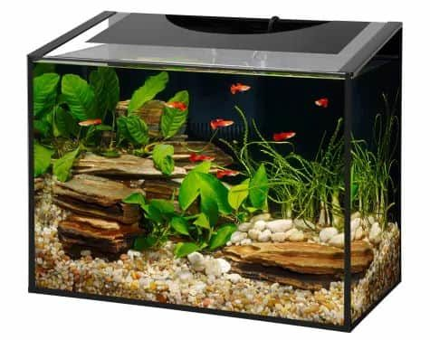 Aqueon Ascent Frameless LED Aquarium Kit, 10 Gallon