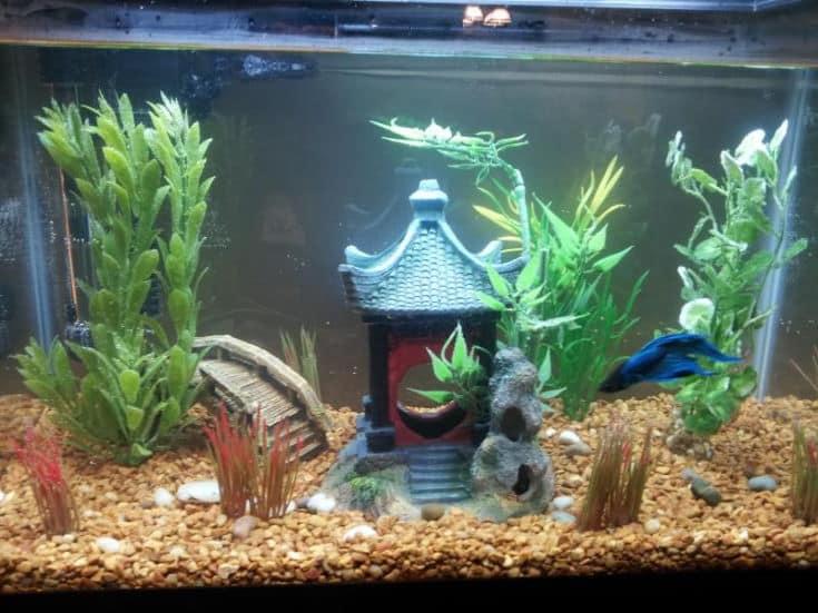 Japanese Garden style fish tank