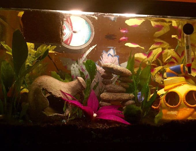 tank is packed with plants and decorations that work well together