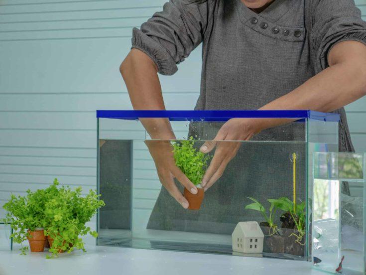 Asian women set the fish tank